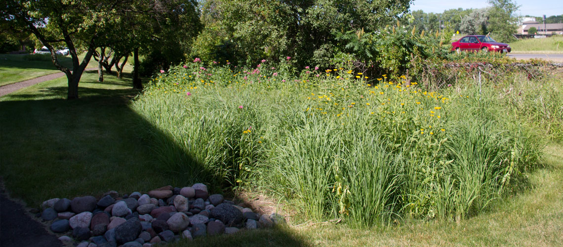 Water and Rain Garden Design and Installation